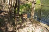 Deer at Meghla Safari.jpg
