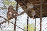 Monkeys at Meghla Safari (2).jpg