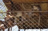 Monkeys at Meghla Safari (3).jpg