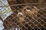 Monkeys at Meghla Safari (4).jpg
