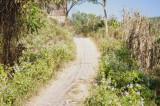 Path on Meghla Parjatan (2).jpg