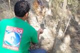 Sohail Feeding Deer.jpg
