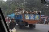 Cows in Truck in Dhaka.jpg