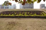 Flowerwords at Lalbagh Fort.jpg