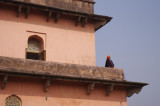 Lady Atop Diwan-i-Aam in Lalbagh Fort.jpg