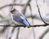 birds_nonraptors