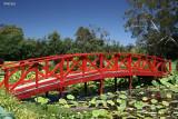 Blue Lotus Water Garden
