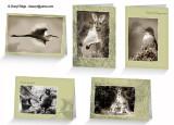 Australian wildlife photo art cards from Redbubble by Cheryl Ridge