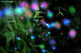 4087- fairies in the garden
