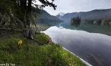 Packwood Lake area trail survey 5-15-10