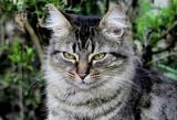 BEFORE:  Cat
