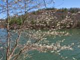 Spring at Mill Creek Lake