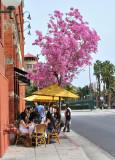 Elements Cafe Pasadena