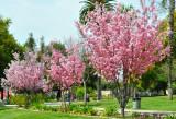 Pasadena Memorial Park
