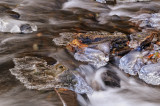 More Ice on Wahkeena Falls