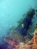 Calamian Islands - WWII Wreck Diving