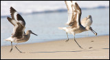 _ADR4458 willets cwf.jpg