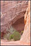 _ADR6704 ls canyon cwf.jpg