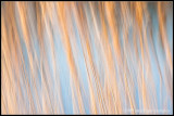 _ADR0475 grasses wf.jpg