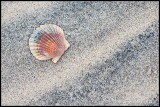 _ADR2663 shell wf.jpg