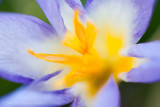 _ADR8024 fiery blue w.jpg