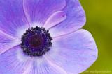 _ADR7748 flower w.jpg
