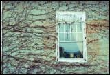 _MG_0532 window wf e.jpg