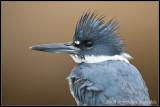 _MG_4592 kingfisher wf.jpg