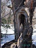 Tree Providing Refuge?