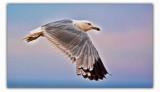 july 4 seagull