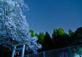 _MG_9171_sakura-night_PB.jpg