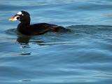 Kalifornien 2010 Fåglar och Natur