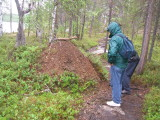 Inari, Norway. Inspecting an anthill