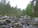 Rocks and forests