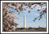 Washington Monument 10