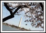 Washington Monument 11