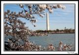 Washington Monument 13