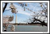 Washington Monument 15