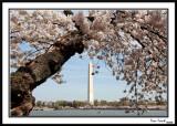 Washington Monument 17