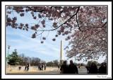 Washington Monument 18
