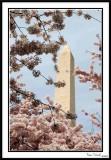 Washington Monument 23