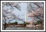 Washington Monument 25
