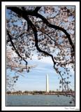 Washington Monument 8