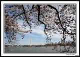 Washington Monument 9