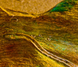 one dried orchid leaf: a minimalist gallery