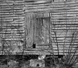 Old Barn, Smithfield, VA, 2010.jpg