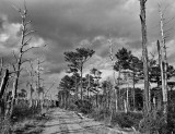 Road into the woods, Eastern Shore, Virginia, 2010.jpg