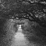 The path at North Pond, Pea Island NWR, North Carolina, 2010.jpg