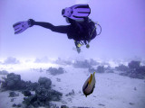 Diver and Emperor Angelfish - Pomacanthus Imperator