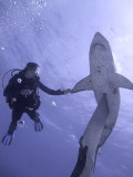 Diver with Statue of Shark on Knife